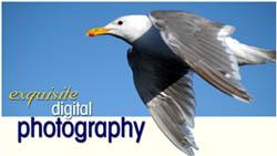 PawPrint360 Digital Photography